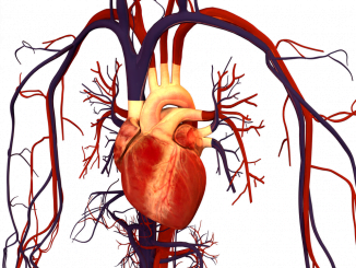 La enfermedad cardiovascular causa 17,3 millones de muertes al año