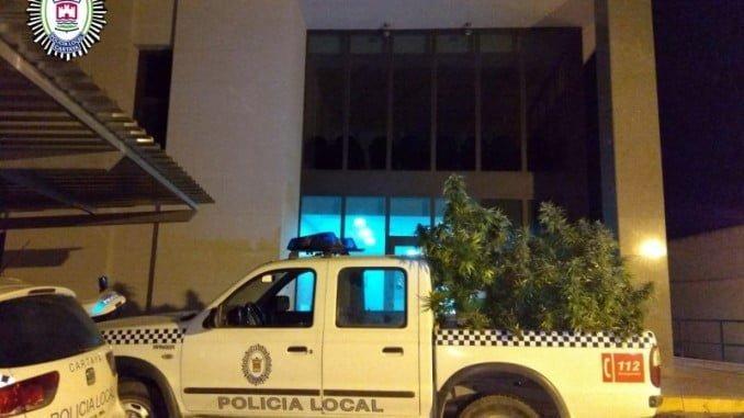 La rarihuana incautada por la Policía Local de Cartaya