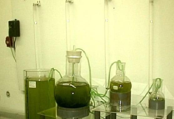 Cultivo de microalgas en laboratorio
