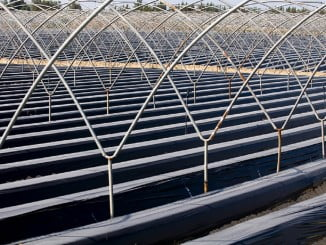 El paro ha subido en Huelva en agosto en todos los sectores, menos en Agricultura