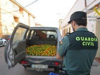 Imagen de las naranjas robadas en una finca privada de Villablanca