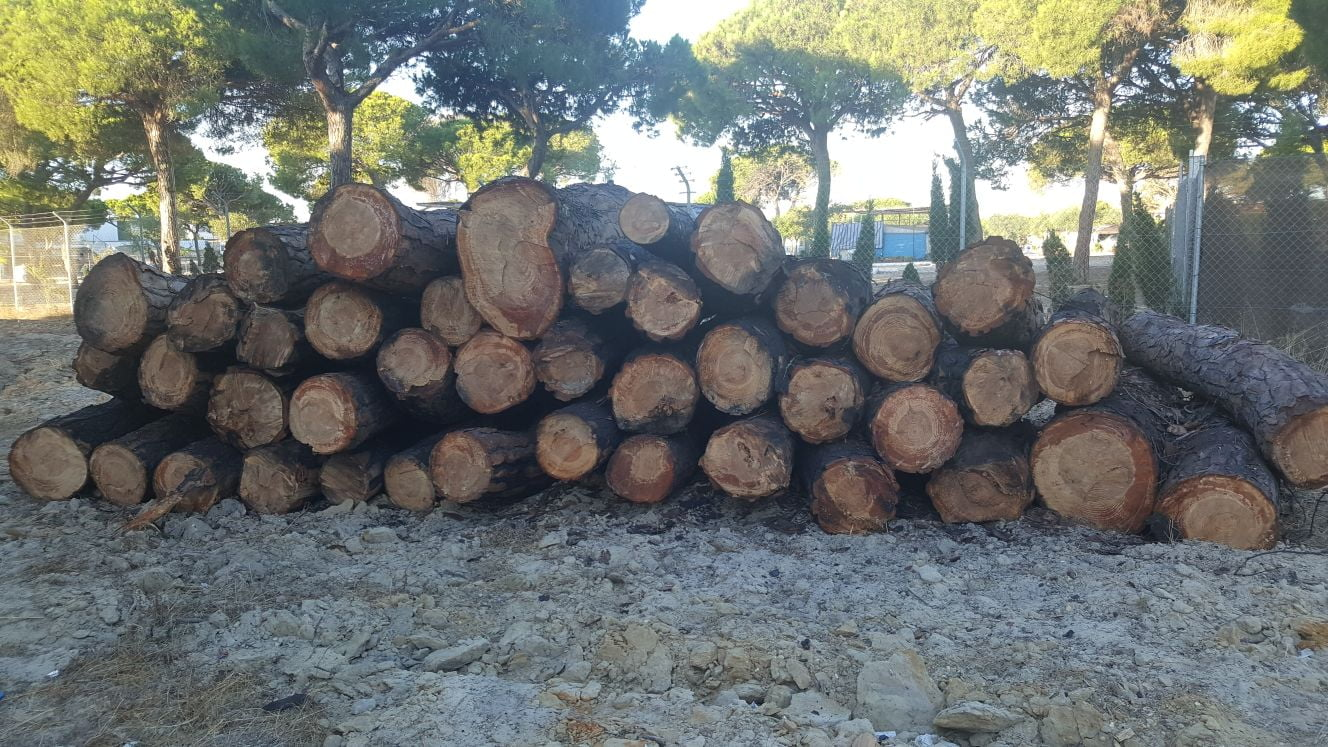 Los trabajos de tala de pinos los realiza el Ayuntamiento de Moguer