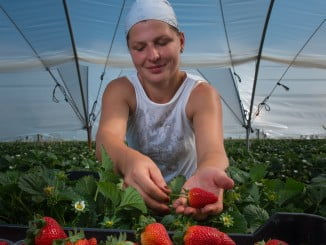 Grufesa estará presente en Fruit Attraction la semana que viene.