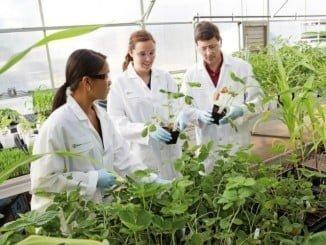 La investigación en el ámbito de la agricultura está creando nuevos puestos de trabajo