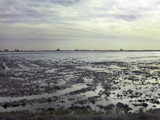 Arrozales de Isla Mayor, en el entorno de Doñana y bajo Guadalquivir
