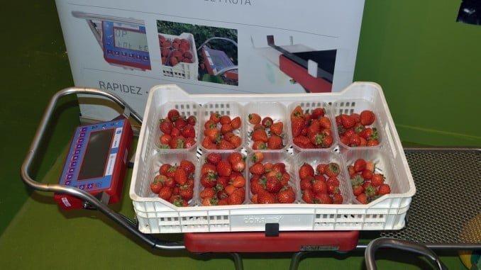 Los visitantes pueden comprobar el funcionamiento del carro-pesa, FR-60 en el mismo stand de Apleinova en Fruit Attraction