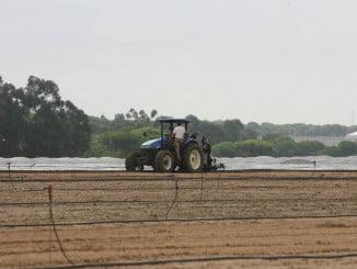 La mayor bajada del paro en Andalucía se ha registrado en Agricultura, con 5.228 desempleados menos