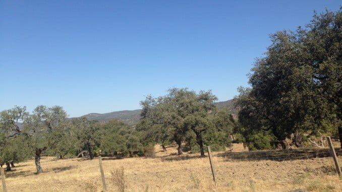Aspecto del campo por la sequía en la Sierra