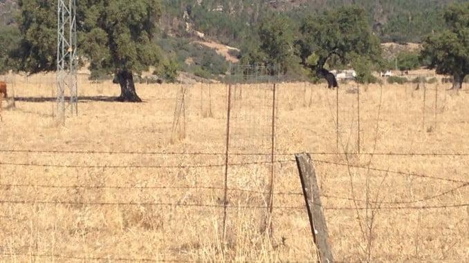 Esta ha sido la imagen del campo andaluz de 2017: Campos secos