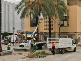 La poda de palmeras se realiza en época de otoño-invierno