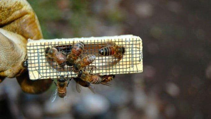 El objetivo principal de estas subvenciones es mejorar la producción y la comercialización de la apicultura.