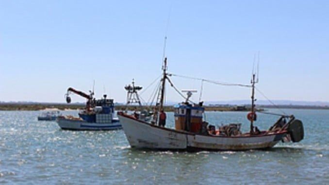 Barcos de la flota de arrastre y cerco del Golfo de Cádiz, que recibirá ayudas por la parada biológica