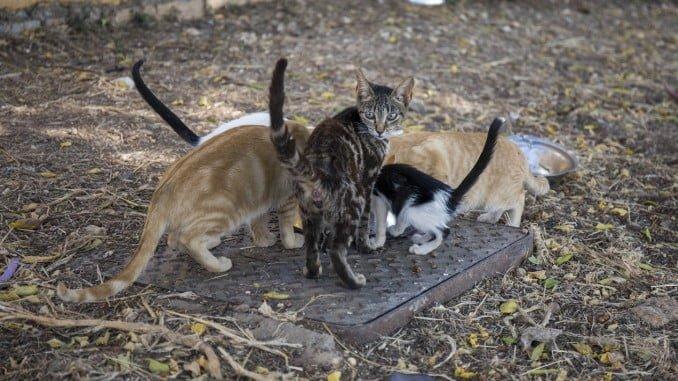 El Servicio de retirada, y custodia de animales vagabundos estará coordinado por el Centro Municipal de Acogida