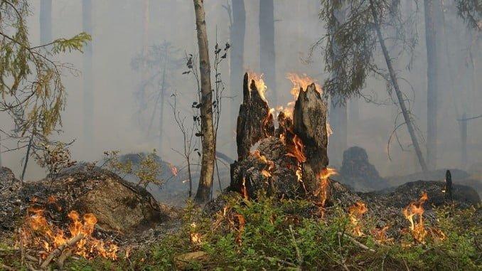 Asaja recuerda el daño a la actividad agrícola y ganadera de los incendios de La Granada y Zufre