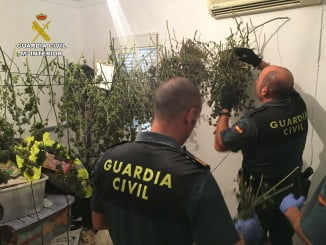 Uno de los registros incluidos en la operación contra el cultivo y venta de marihuana