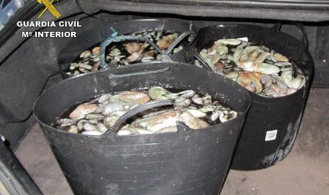 Intervención de pulpo en Punta Umbría