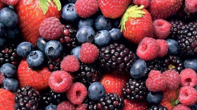 Los frutos rojos, protagonistas de las jornadas del IFAPA