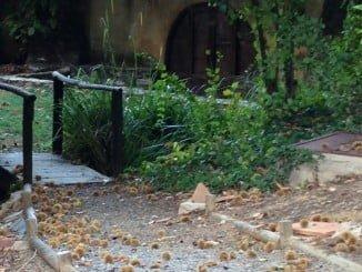 Enclaves turísticos como éste, de en Fuenteheridos, harán las delicias de los turistas estos días