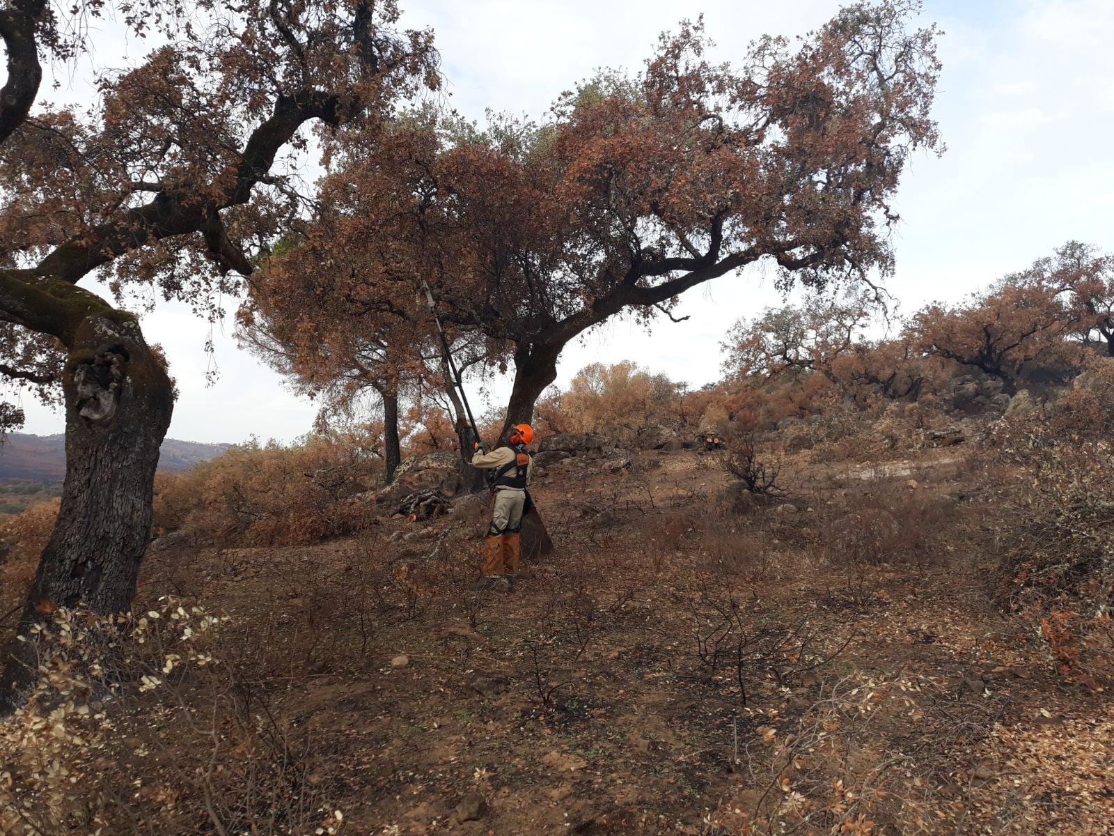 El fuego originado el 8 de septiembre afectó a 4.167,94 hectáreas