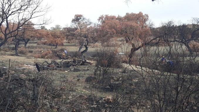 La Junta inicia las obras de restauración de la zona afectada por el incendio de La Granada