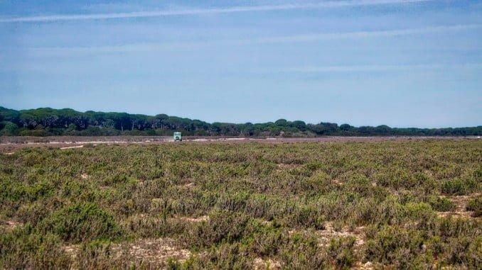 La intervención se ha desarrollado en montes públicos del Espacio Natural de Doñana