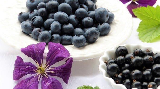Los arochenos podrán celebrar el Nuevo Año con arándanos, en lugar de uvas