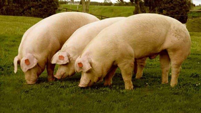 Las exportaciones de animales vivos se han situado en 99.113 toneladas, con las ventas centradas en países de la Unión Europea, especialmente en Portugal
