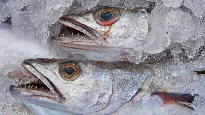 España intentará rebajar los recortes de las capturas para la merluza del sur y el jurel