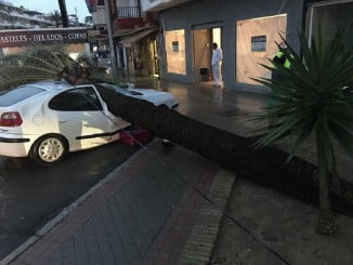 Un vehículo ha sido dañado por la caída de un árbol en Punta Umbría