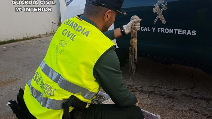 La Guardia Civil incautó en noviembre otros 90 kilos de pulpo inmaduro en la misma zona