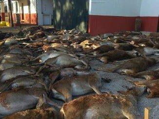 Algunos de los animales muertos en una batida en la zona del incendio de La Granada de Riotinto