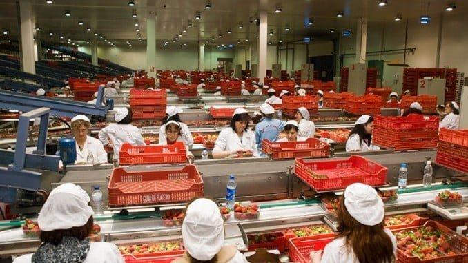 La venta al exterior de las frutas frescas en Huelva alcanzó los 1.085 millones de euros