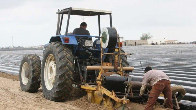 Asaja contará con 3.000 trabajadores marroquíes de los 5.000 solicitados