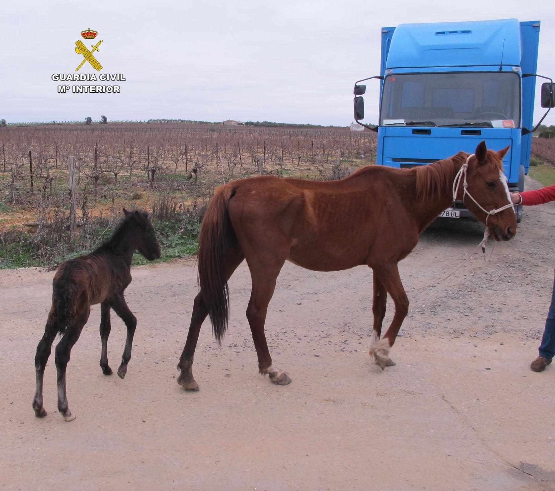 El propietario de los caballos se enfrenta a un delito de abandono de animales
