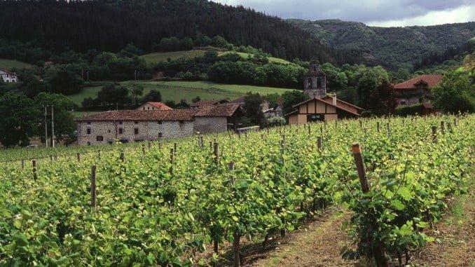 El reglamento permite limitar la superficie de viñedo en zonas de producción de vinos DOP cuando haya riesgo demostrado de devaluación de ésta