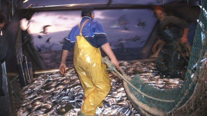 Las cofradías de pescadores se encuentran entre los beneficiarios de las ayudas
