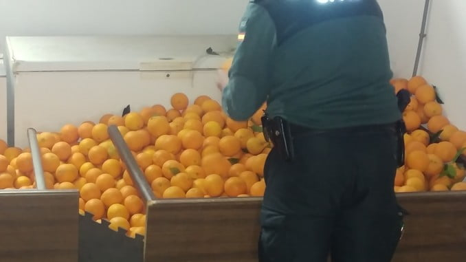 Naranjas aprehendidas por la Guardia Civil