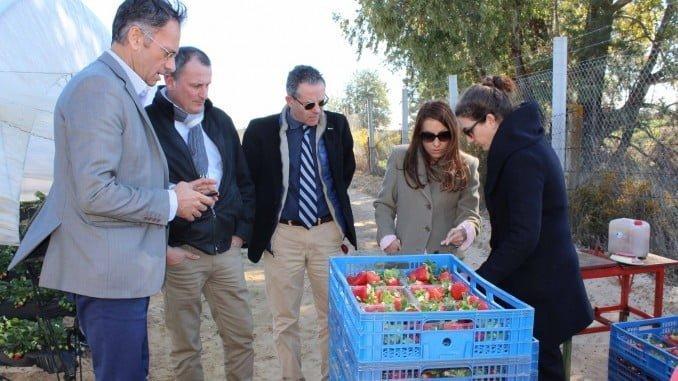 Productores de fresas de Francia, Italia y España visitan plantaciones en Bonares y Moguer