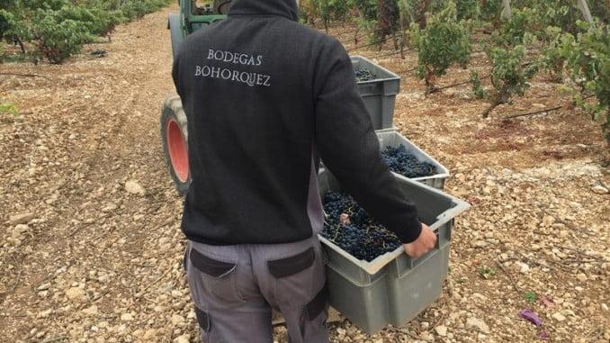 La producción de Bodegas Bohórquez se encuentra en torno a las 80.000 botellas
