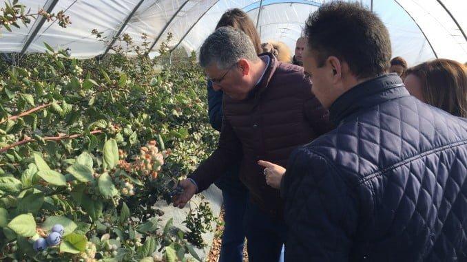El delegado de Medio Ambiente conoce de primera mano la realidad de los berries en Palos de la Frontera
