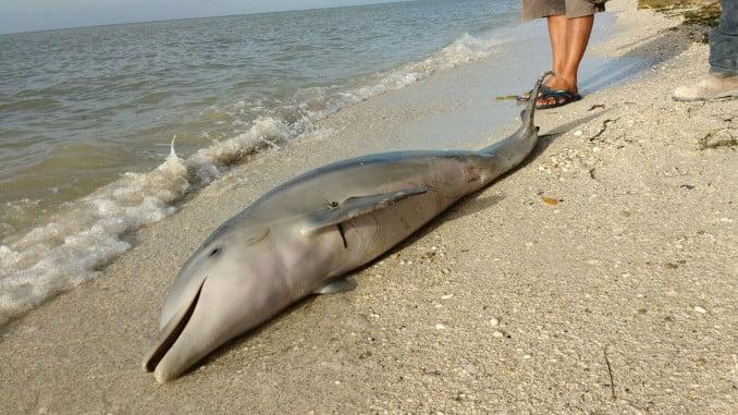 Imagen de un delfín muerto en una playa