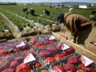 El sector de la agricultura salva a Huelva de los datos del paro