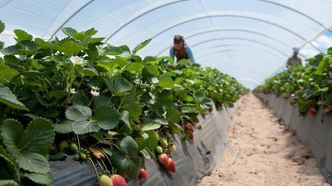 La mejoría del paro de este mes se debe al impulso de la campaña agrícola
