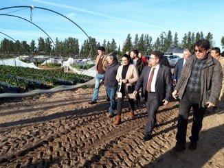Sánchez Haro visita las fincas agrícolas de Almonte afectadas por el temporal