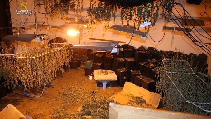 Plantación de marihuana en una casa de Ayamonte
