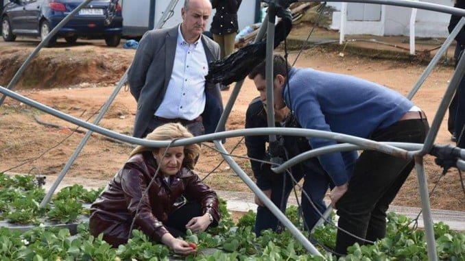 Bañez, durante una visita a los campos destrozados tras el temporal en Lepe