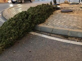 Árboles caídos obstaculizan el paso en las vías