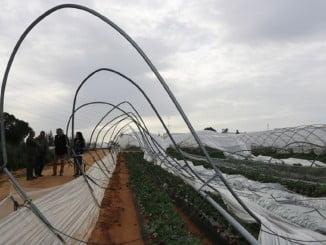 El temporal de lluvia y viento ha arrasado los campos de Cartaya