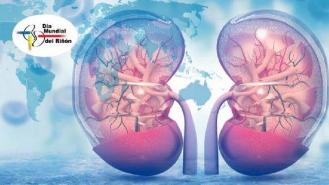Controlar el consumo de proteínas, vigilar la sal o hidratarse correctamente son algunas de las pautas que se recomiendan para disfrutar de una buena salud renal