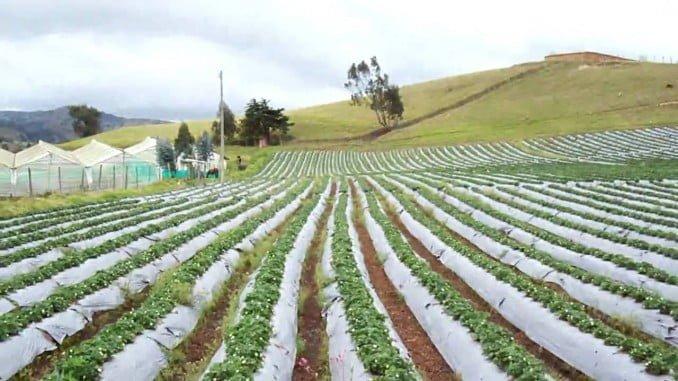 En la nueva campaña PAC 2018 Caja Rural del Sur ofrece a sus clientes una línea de financiación específica al 0% de interés para anticipar las ayudas comunitaria